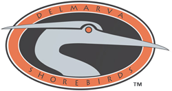 The Delmarva Shorebirds